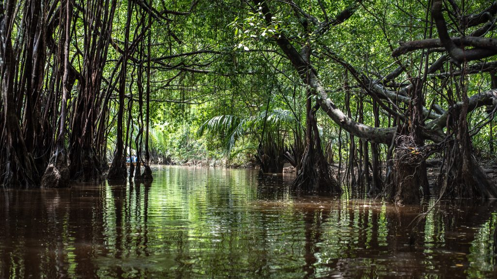 the little amazon in pang-nga in Sang Nae Canal thailand